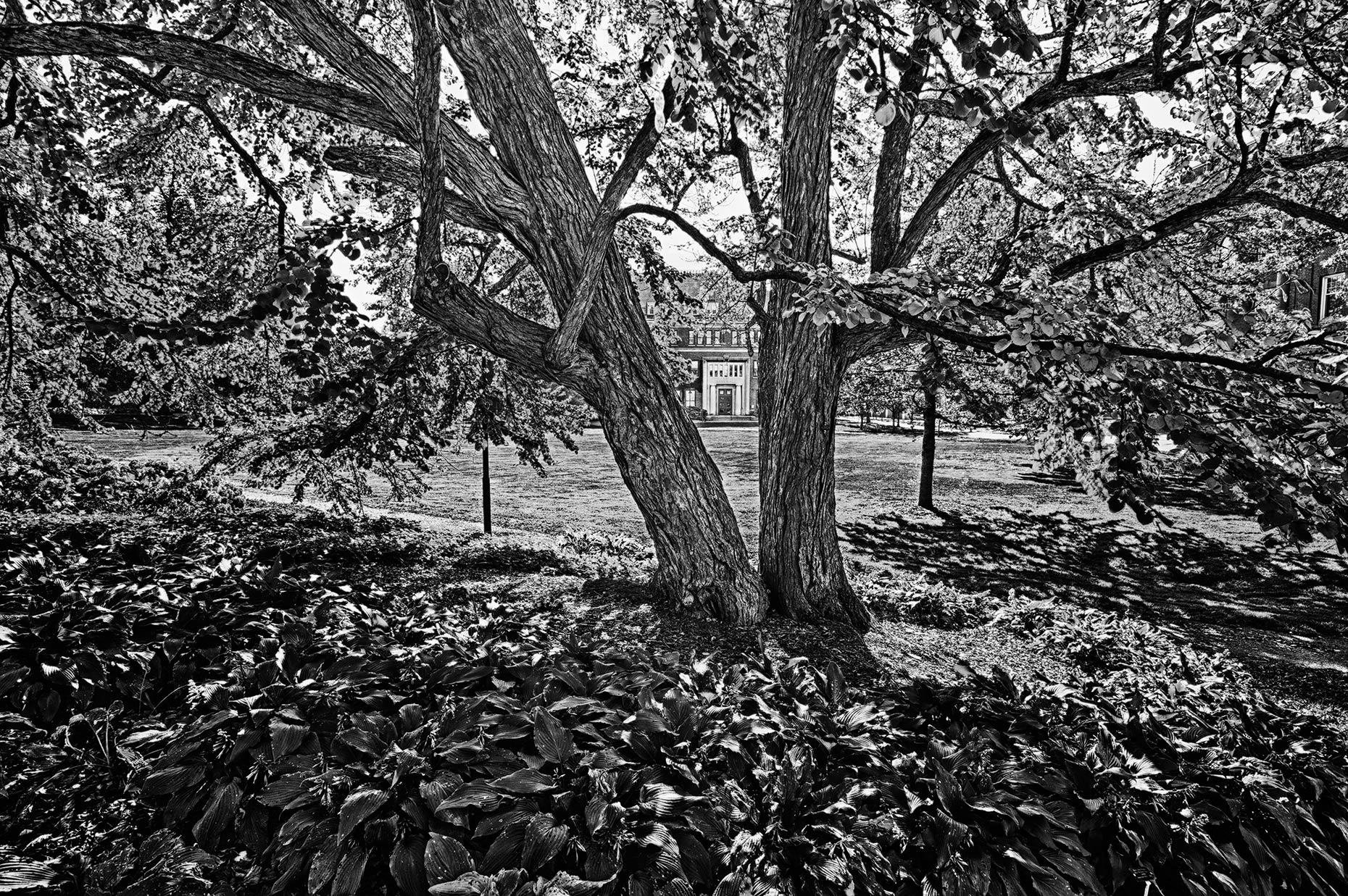 2012_gipe_Campus_Trees_01