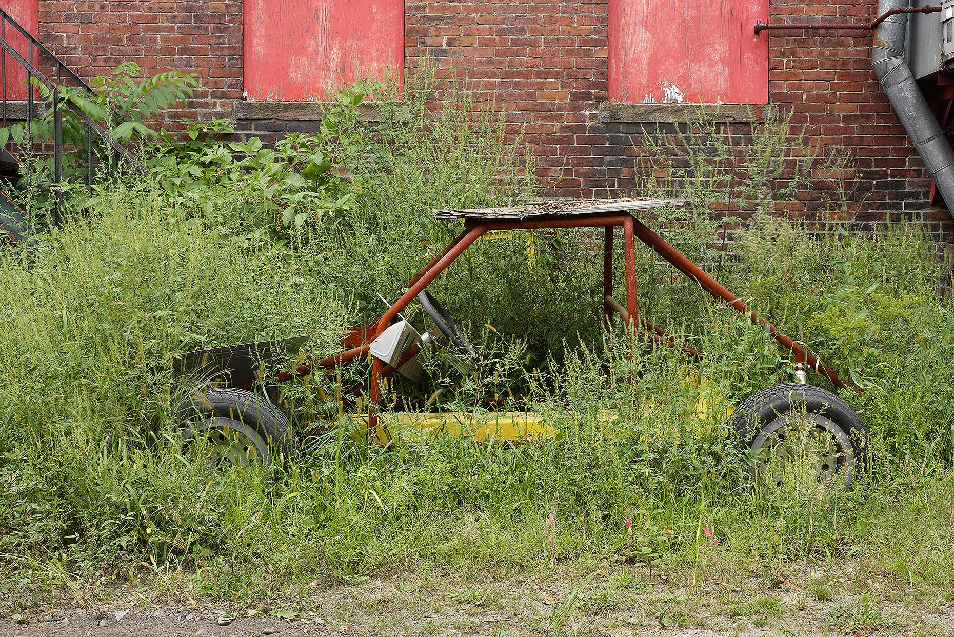 car-in-weeds